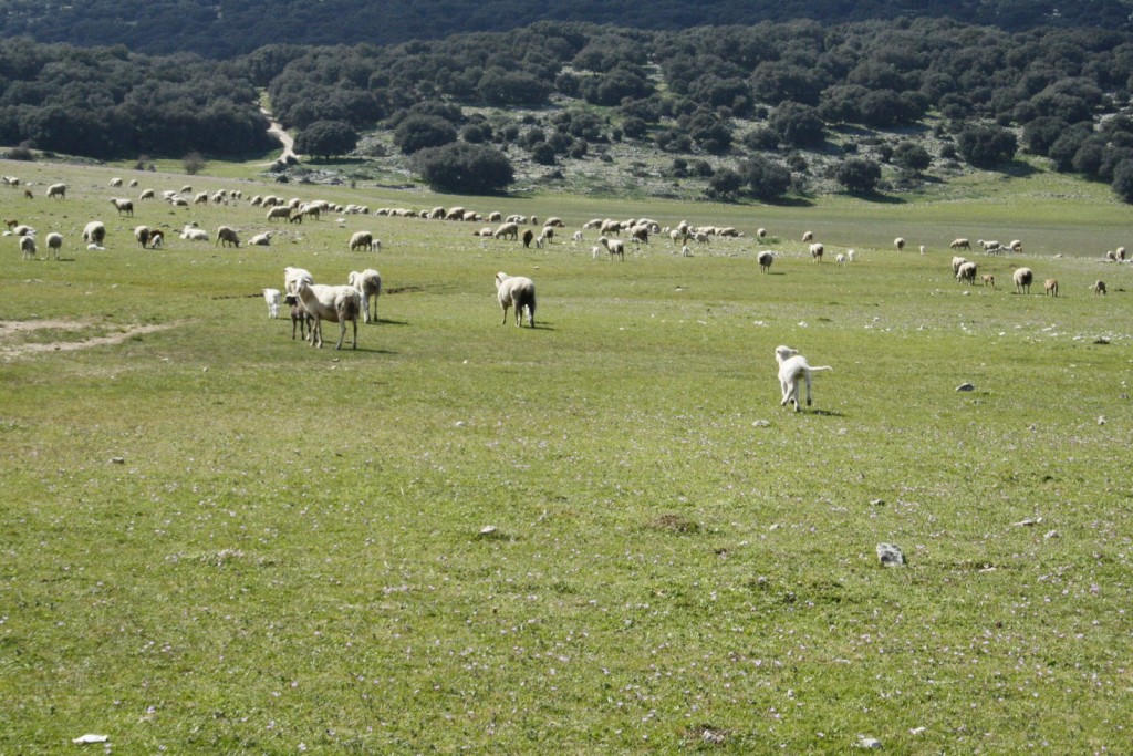 Spring time in Sierra de Cabra_4